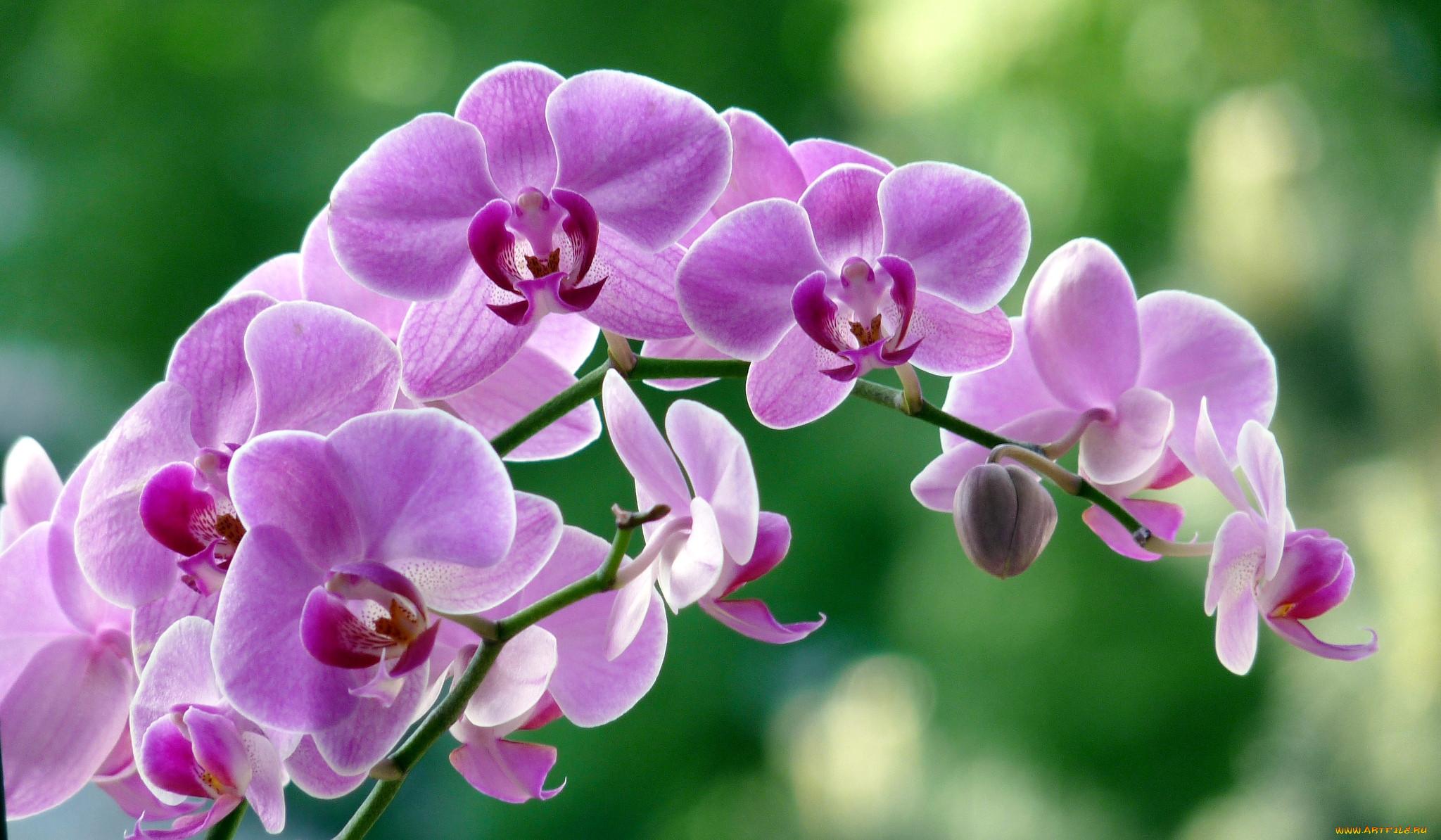 отличный картинки для рабочего стола цветы орхидеи целях